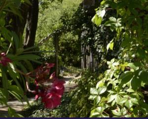 découverte au jardin d'Aujargues